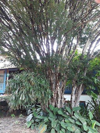 Florestal Photo