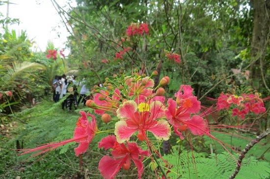 foto de jardin botanico bio kuka pucallpa entrada