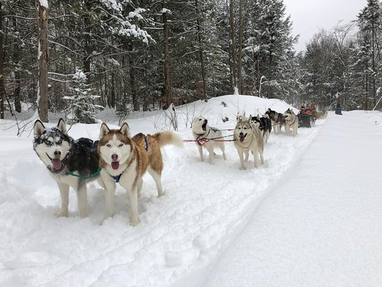 Peace Pups Dog Sledding