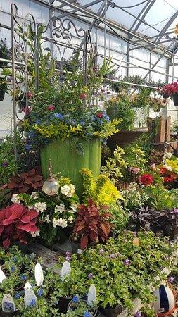 Hardy, VA: Beautifu displays at Walter's Greenhouse