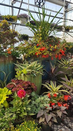 Hardy, VA: Designed to fill your home and garden with all types of plants.