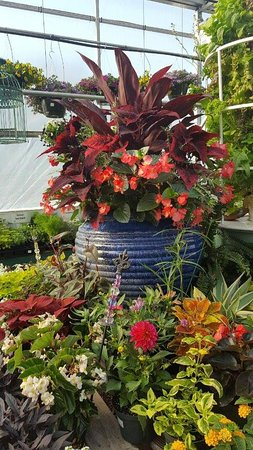Hardy, VA: Beautiful displays throughout Walter's Greenhouse.