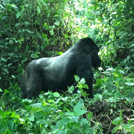 Goma, Λαϊκή Δημοκρατία του Κονγκό: Quel bonheur de découvrir cette région de la RDC ! Gentillesse des personnes, Volcan , gorilles,