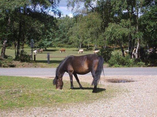 ponies roam free picture of oak tree bungalow cadnam tripadvisor