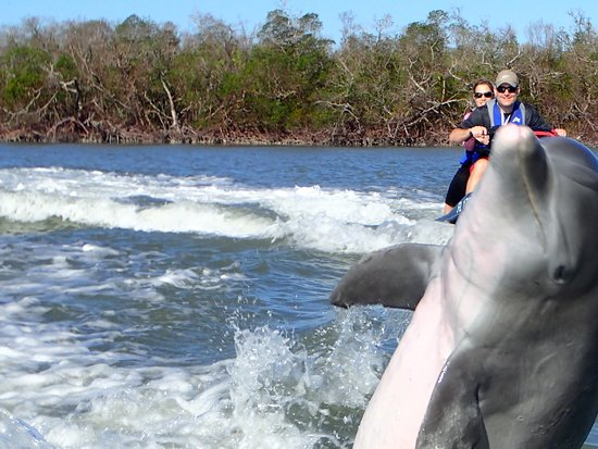 Capt. Ron's Awesome Everglades Adventures: They love to jump!
