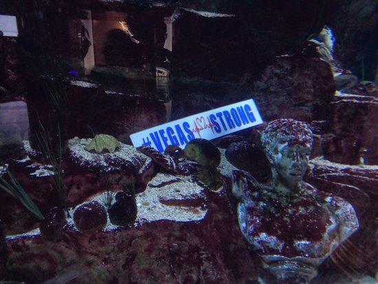 Fish tank picture of forum shops at caesars palace las for Fish tank las vegas