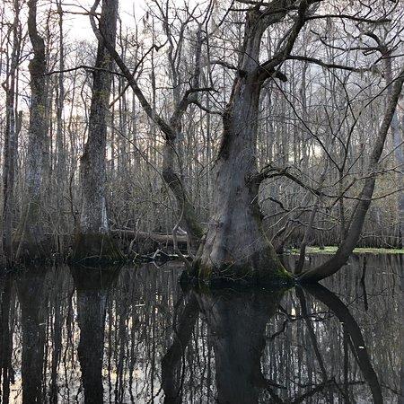 Conway, Carolina del Sur: photo4.jpg