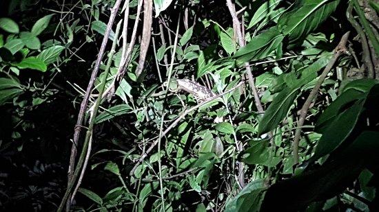Guia Naturalista Olman Gonzalez: lizard