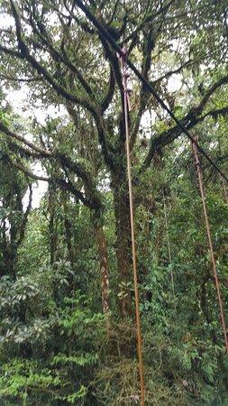 Guia Naturalista Olman Gonzalez: Cloud Forest