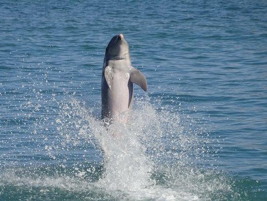 Dolphin Cove Montego Bay