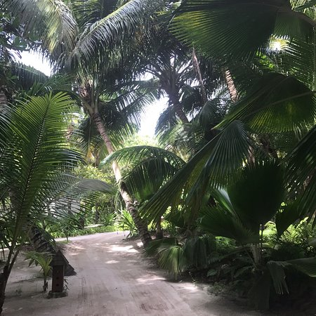 Denis Island, Seychelles: photo8.jpg