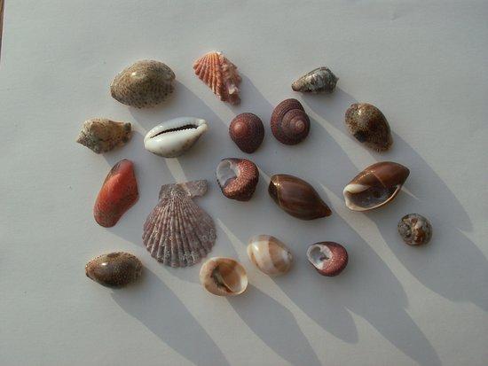 Masirah Island, Oman: beautifull seashells