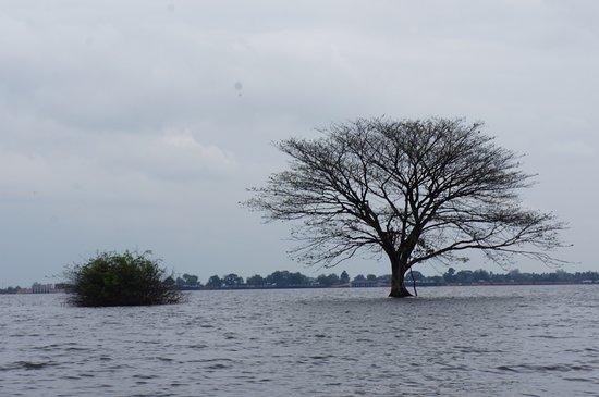 Kamping Puoy Reservoir: 水中樹