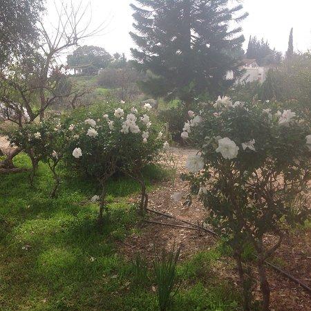Chorazim, Israel: Pina Bagalile