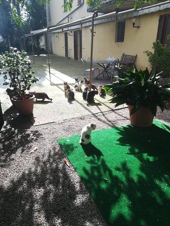 San Venanzo, Italien: IMG_20180224_130835_large.jpg