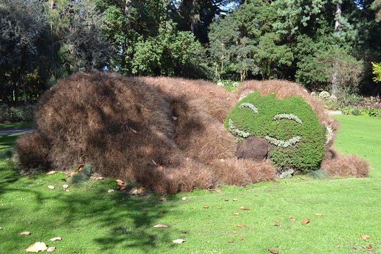Un ours ! - Photo de Jardin des Plantes, Nantes - TripAdvisor