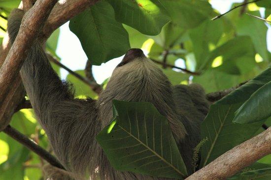 Sloth In Manuel Antonio National Park Bild Von Costa Rica Jade