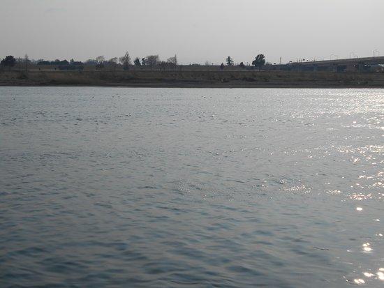 Tonegawa River