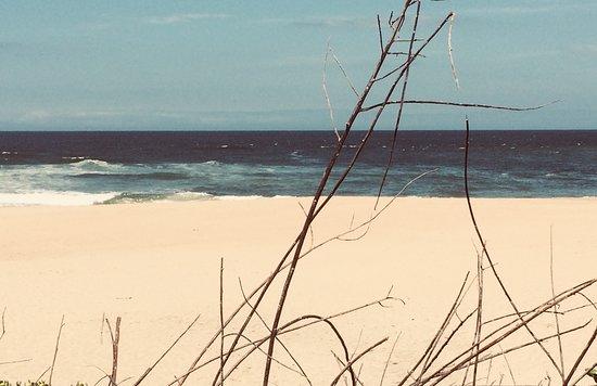 Wilderness Beach-bild