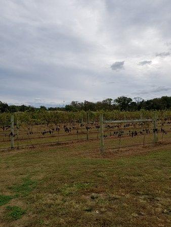 Willow Creek Winery: 20171016_155252_large.jpg