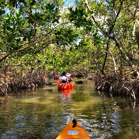 Nov 24,  · Kayak Sarasota and the Lido Key Mangrove Tunnels with dolphins and manatee with Liquid Blue Kayak Outfitters. We offer kayak rentals and kayak tours located and launching from the Ted Sperling Park on Lido Key in Sarasota.5/5(K).