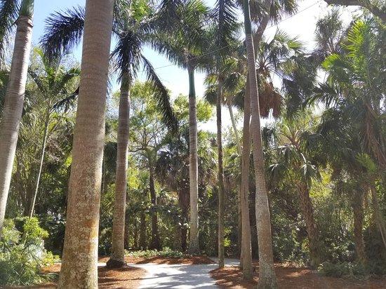 20180224 140019 Picture Of Mckee Botanical Garden Vero Beach Tripadvisor