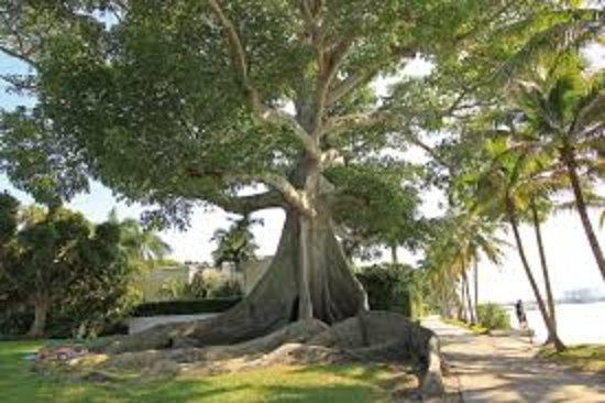 Hawthorn Suites by Wyndham West Palm Beach : Purely Palm Beach Day Tour. Guide: Debbie Hudzik.