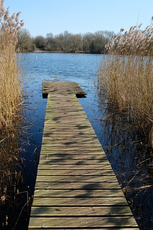 Dinton Pastures Country Park: Walkway view