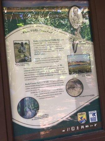 Rachel Carson National Wildlife Refuge: Rachel Carson info about preserve