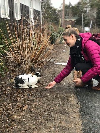 Southwest Nova Scotia, Canada: We found a bunny!