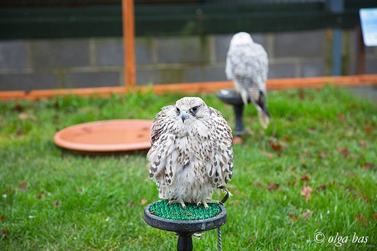 National Bird of Prey Centre : Bird of Prey Centre.