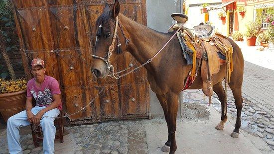 El Quelite, Meksiko: Horse Riding Available
