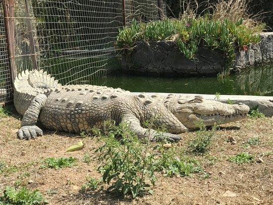 Zoologico Wameru