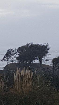 Cape Perpetua Scenic Area Photo