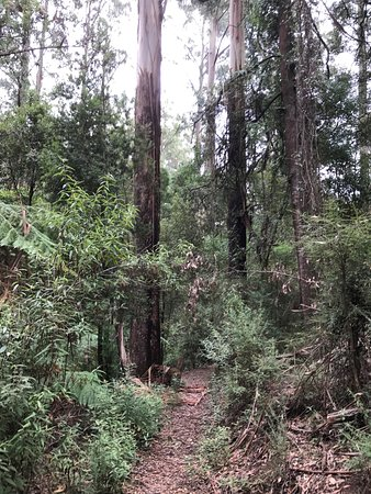 Neerim, Australia: Glen Nayook Reserve