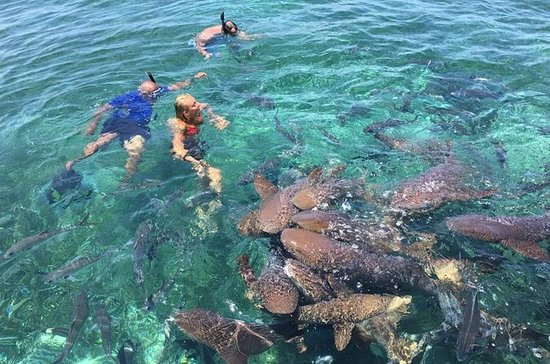 Hol Chan Marine Reserve and Shark Ray...