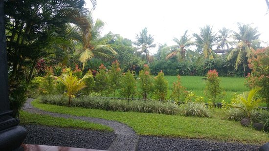 Gerebig Bungalows: View of the garden and rice field from our ground floor bungalow.