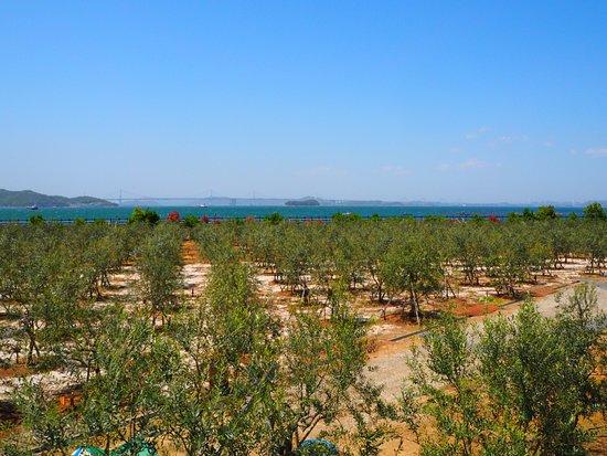 Setouchi Olive Garden
