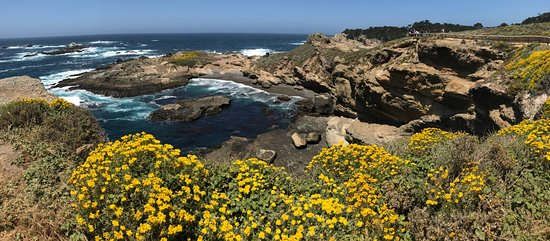 Point Lobos: Headland Cove