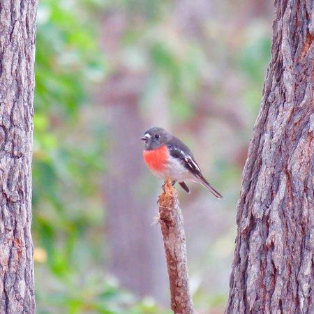 Boyup Brook, أستراليا: photo9.jpg