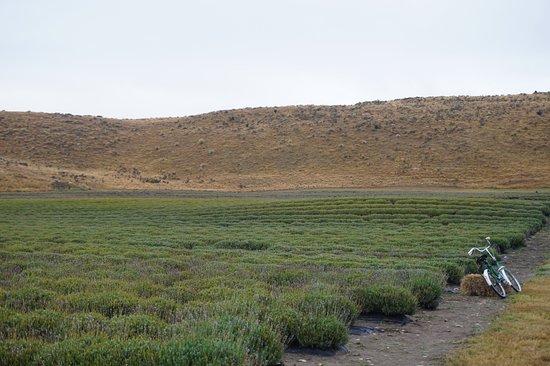 Mackenzie District, Neuseeland: More views of the farm