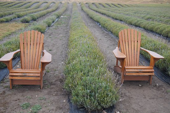 Mackenzie District, Neuseeland: Chairs for you to sit and take photos