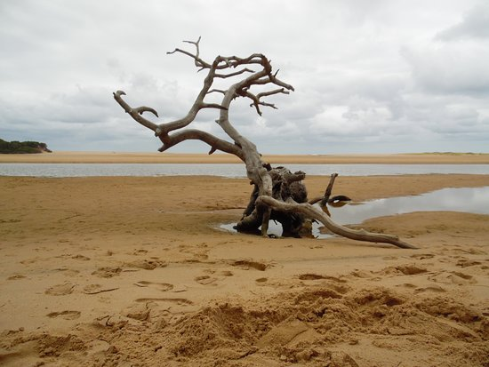 """Utshwayelo Lodge: The iconic dead tree that greets all visitors to the """"Mouth"""""""