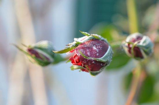 Eggersdorf bei Graz, Österreich: Eisblüte