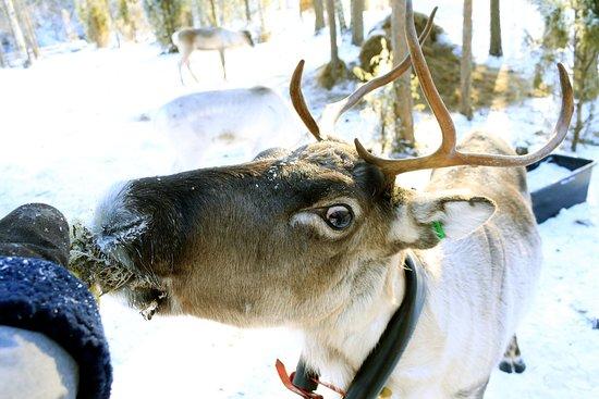 Rantasalmi, Suomi: Loving it -moss!