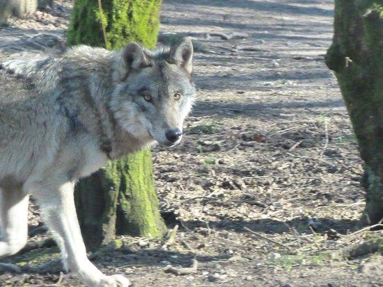Jurques, Francia: Loup