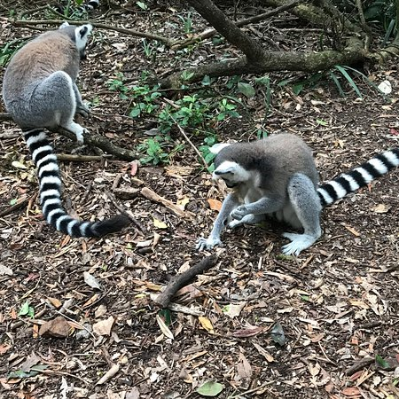 Monkeyland Primate Sanctuary: photo0.jpg