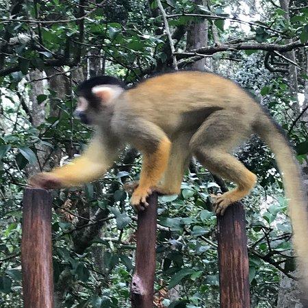 Monkeyland Primate Sanctuary: photo3.jpg