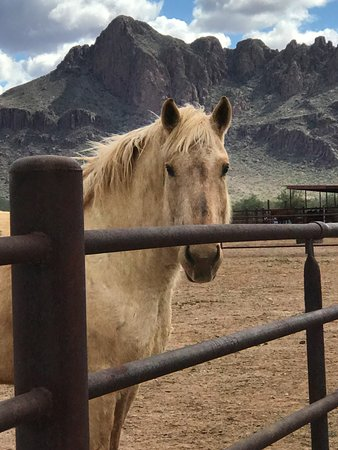 White Stallion Ranch: Horseback