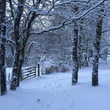Wildside Highland Lodges: photo2.jpg